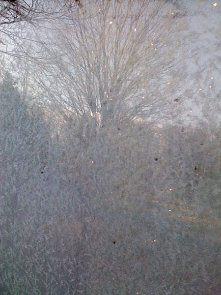 treeflection1