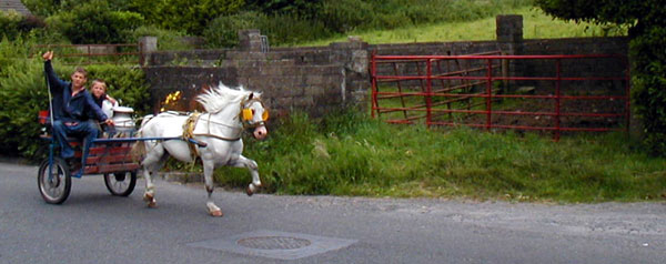 pony-cart1